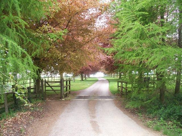 Driveway to Weston Park Farm