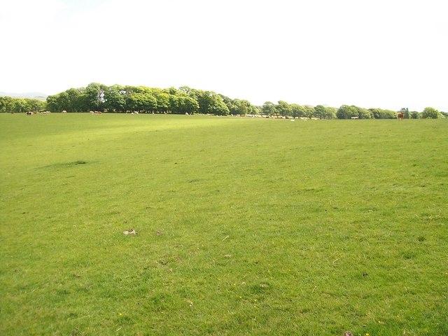 Large grazing field at Gwynfryn Farm