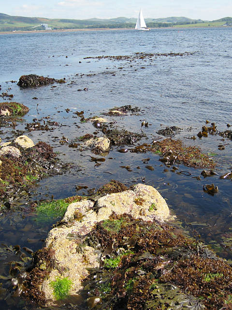 Rocks and seaweed at Farland Point