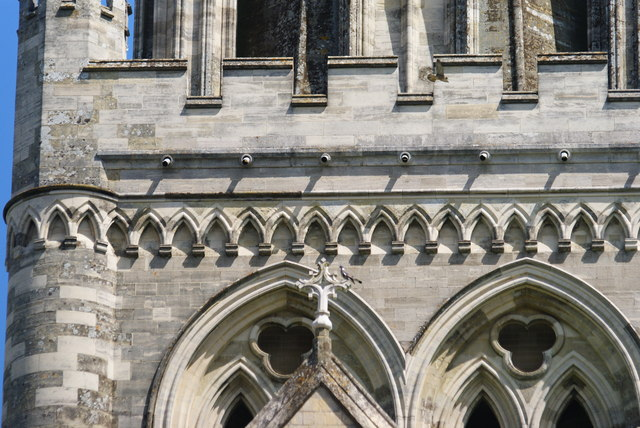 Peregrine Falcons at Chichester Cathedral (4)