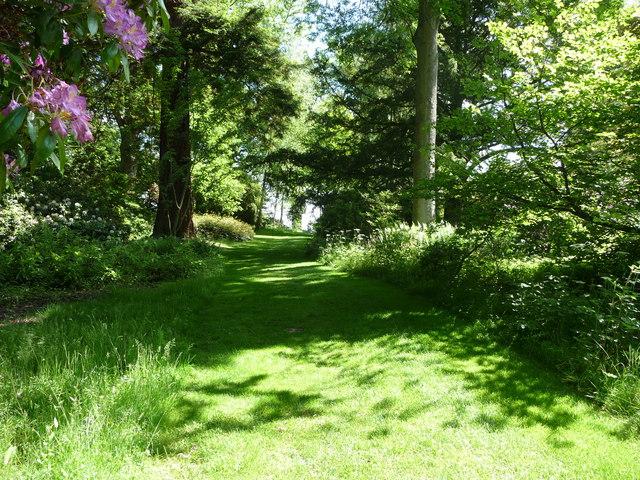Woodland walk in Powis Castle grounds