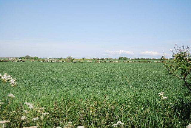 Wheat by Cliff Lane