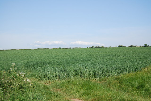 Wheat, Cliff Lane