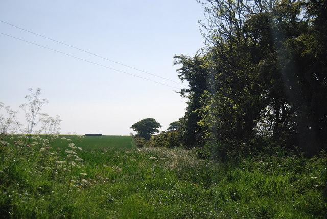 Hedge off Cliff Lane