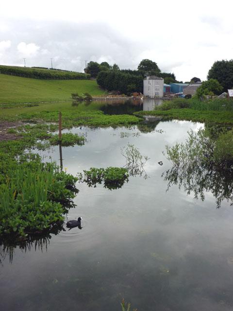 Millpond, Holme Mills