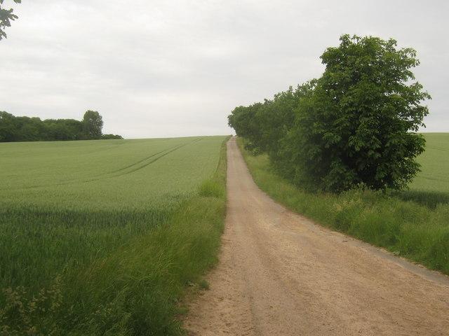 Farm road towards Appledore Road