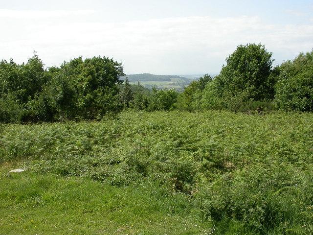 Hillfield Hill, view