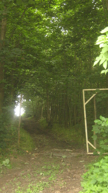 Track through Frenchay Wood