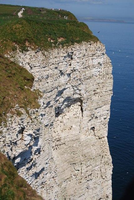 Birds, Bempton Cliff