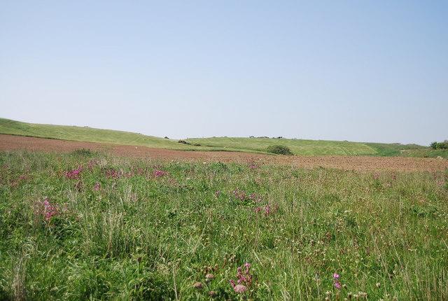 Wildflowers by the Headland Way