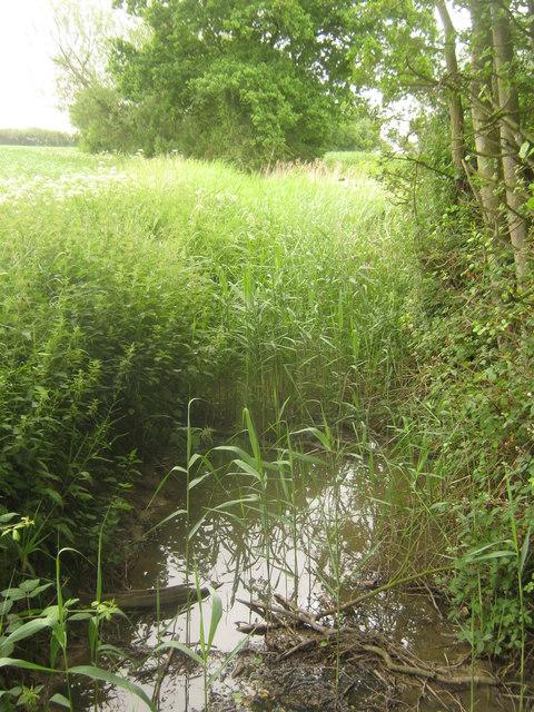 Dyke near Spring Wood (2)