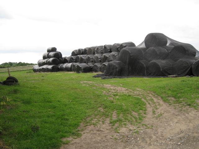 Under wraps, Brome Hall Farm