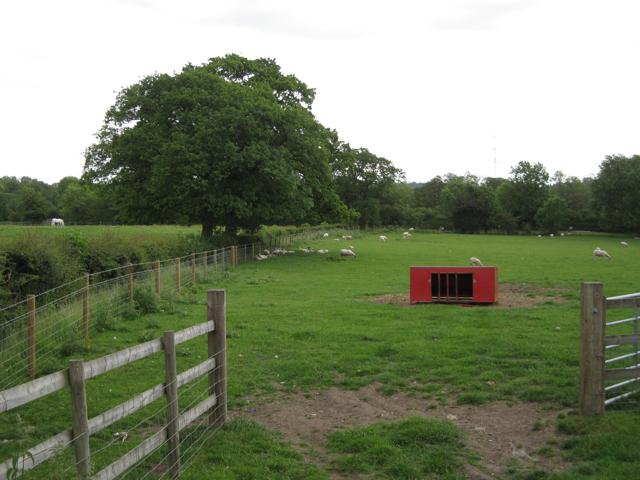 Sheep and a horse, Brome Hall Farm