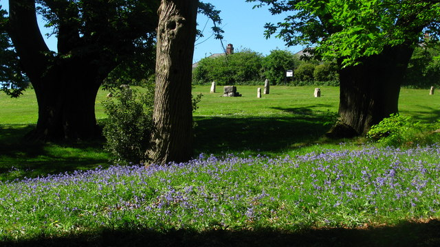 Bluebells and Stone Circle