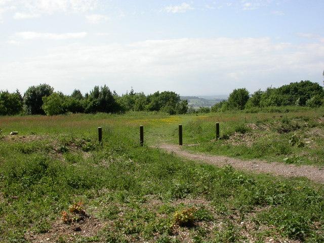Hilfield Hill Local Nature Reserve