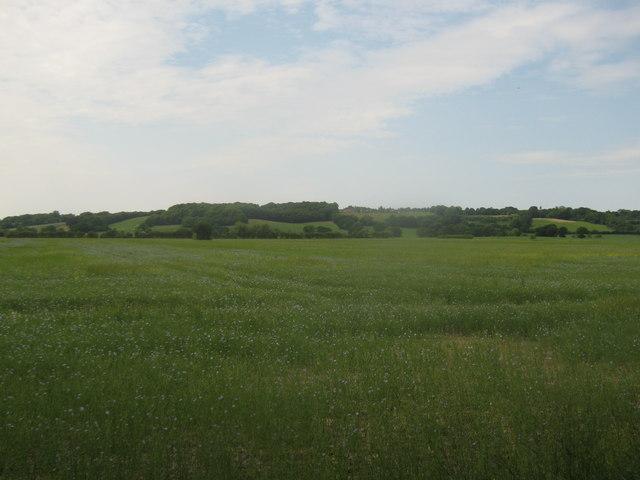 Flax Field near the Tenterden Sewer