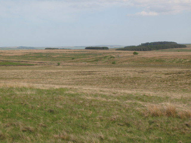 Panorama from the currick on Curricks Rigg (12: ESE - Kingswood Common)