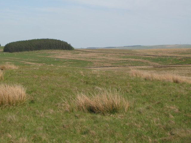 Panorama from the currick on Curricks Rigg (13: E - Track and plantation on Ridley Common)