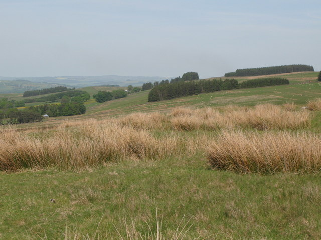 Panorama from the currick on Curricks Rigg (14: ENE - Plantations on Ridley Common)