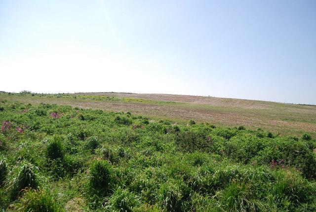 A headland strip, Bempton Cliffs