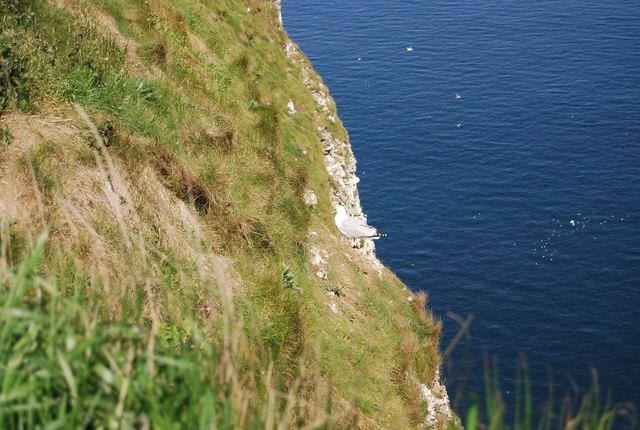 A bird on Bempton Cliffs