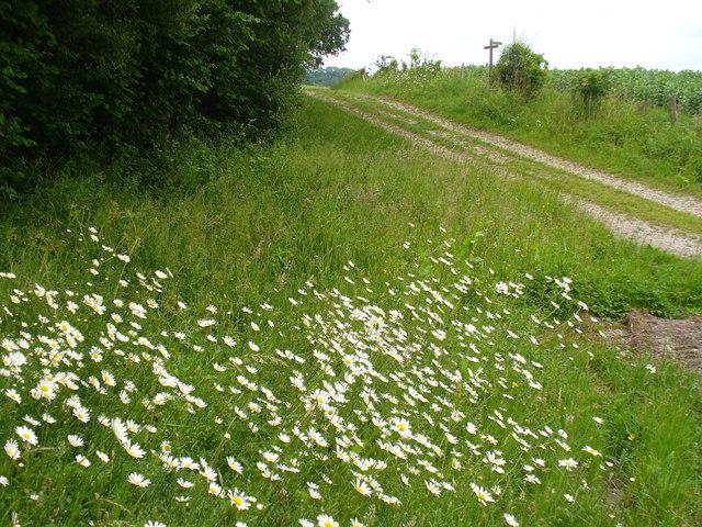 Footpath near Wyck