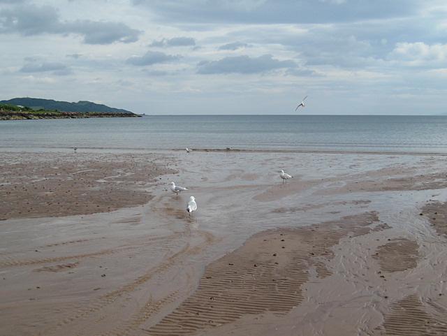 Gulls at low tide