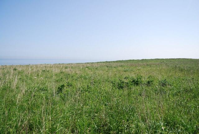 Grassland, Bempton Cliff