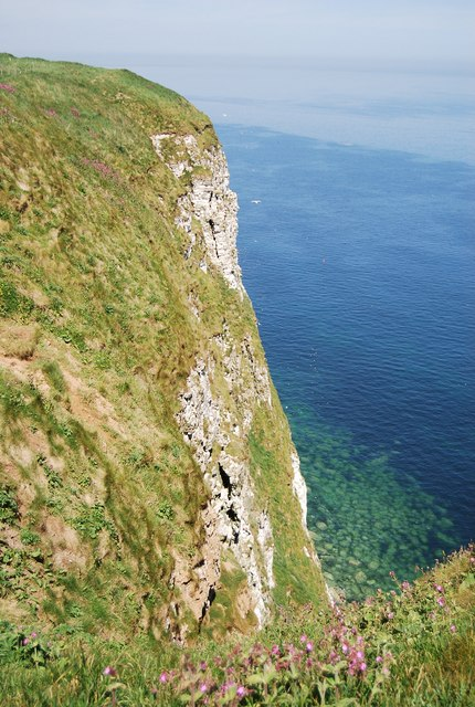 Eastern section of Bempton Cliffs