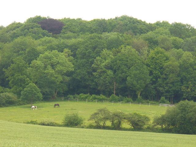 Hillside by Hoggatts