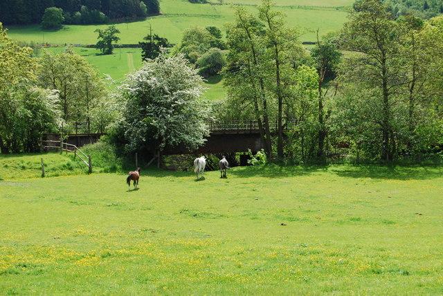Horses grazing by Pont Dol-y-gadfa