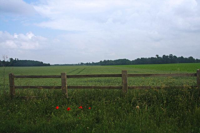 Wheat field near Waterhall Farm
