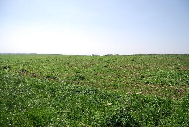 Grassland by the Headland Way