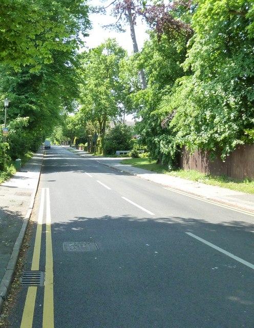 Summer in Oldfield Road