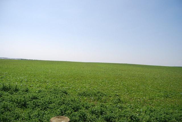 Farmland, North Cliff