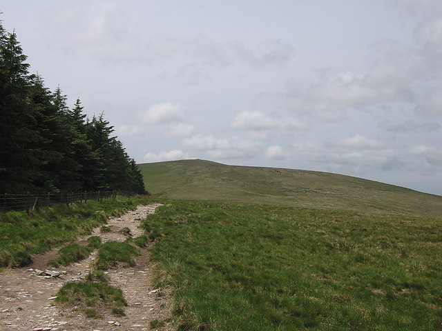 Looking along the edge of Preseli forest