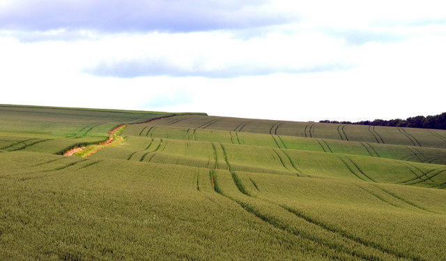 Tractor Tracks in a Wolds' Field
