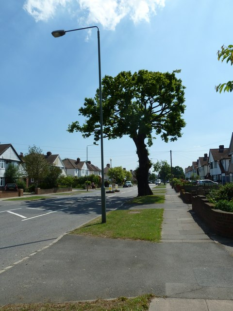 Tree at the southern end of Backbrook Lane