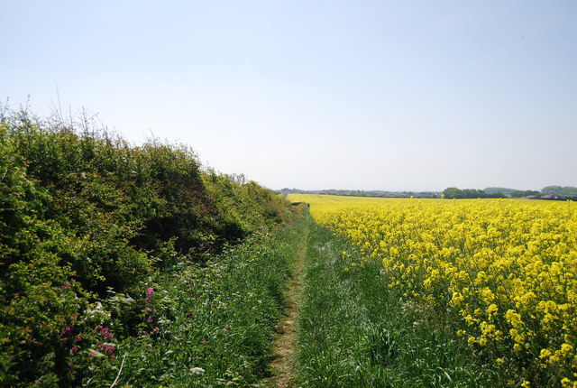 Footpath south by the rapeseed
