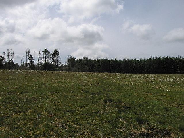 Edge of the forest, Preseli