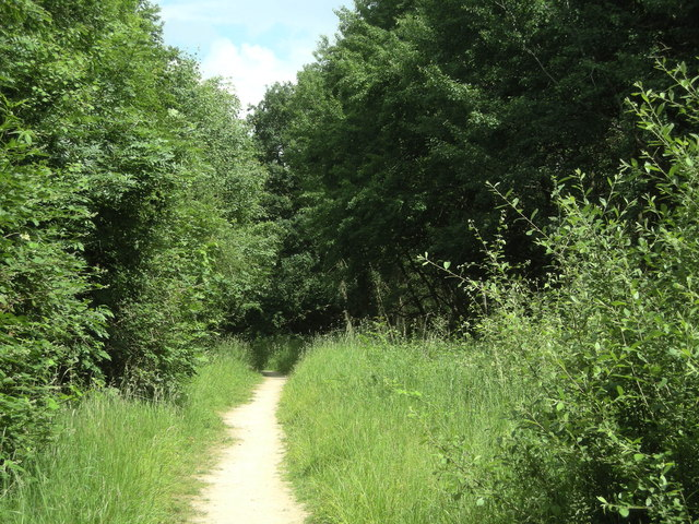 Wappenbury Wood
