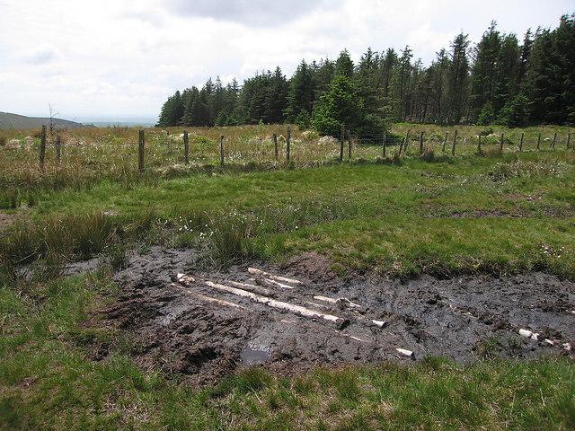 Boggy patch on the Preseli ridge