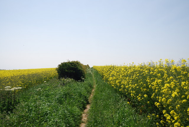 Footpath south through the oil seed rape
