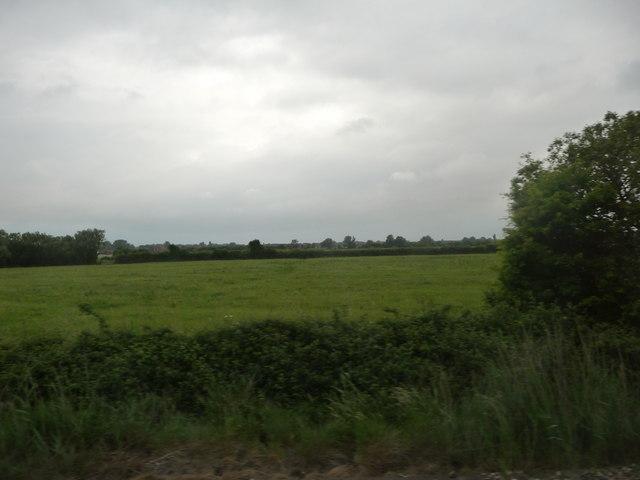 Sedgemoor : Grassy Field & Bushes