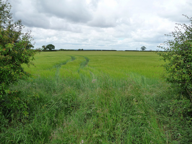 Wheat on Horkstow Wolds