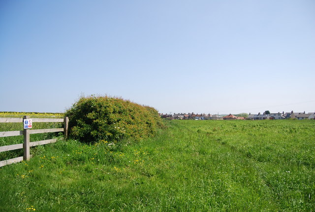 Hedge on the edge of Flamborough