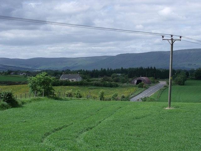 Growing grass near edge of field