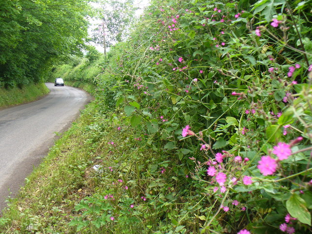 Binsted Road
