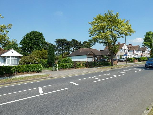 Summer in Southborough Lane