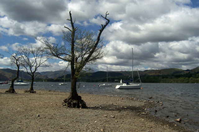 Distressed Trees on Ullswater